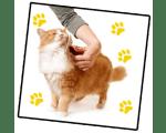 Стрижка котов (кошек)