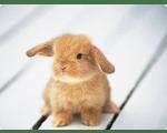 Стерелизация кролика