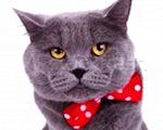 кастрация кота, стерилизация котов, кастрация кота на дому, кастрация котов киев, цена