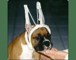 Купирование ушей у собак.