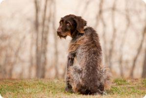 Вагинанальные выделение у щенка