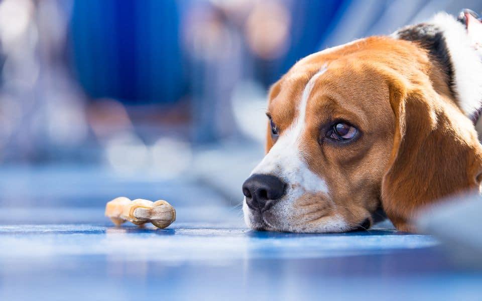 Что делать, если собака ест с трудом?