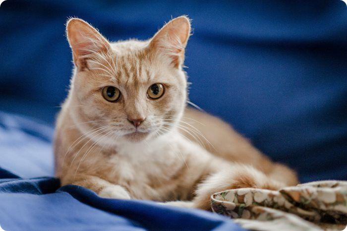 В каком возрасте лучше делать кастрацию кота. Во сколько месяцев?