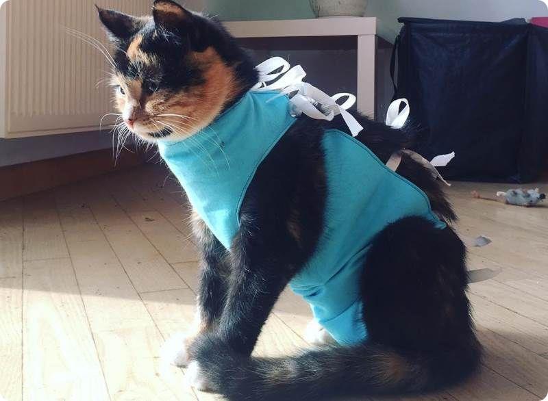 В каком возрасте лучше проводить стерилизацию кошек?