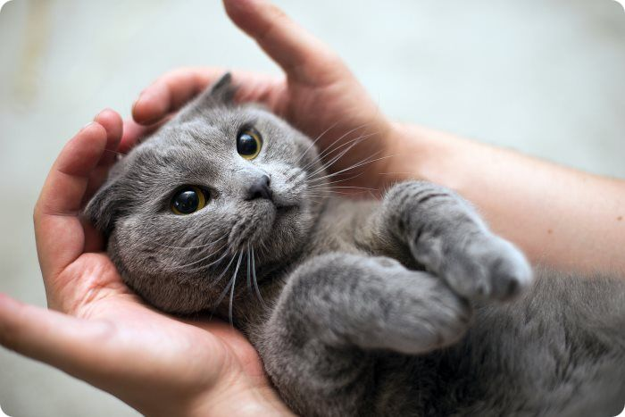 Какой наркоз применяют для стерилизации кошек?