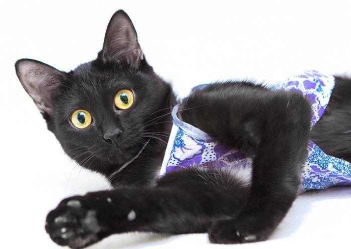 Как делается стерилизация кошек?