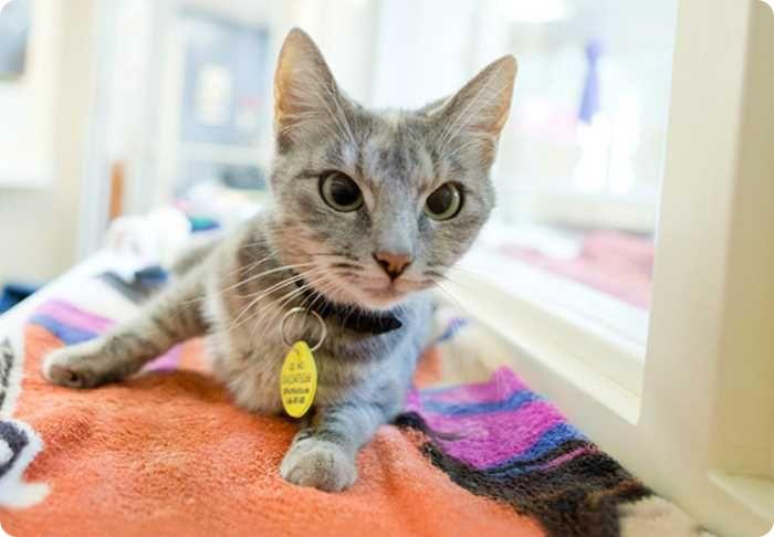Как проходит стерилизация кошек?