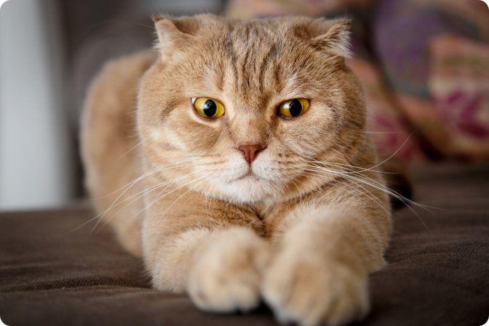 Можно ли кормить кота рыбой после кастрации