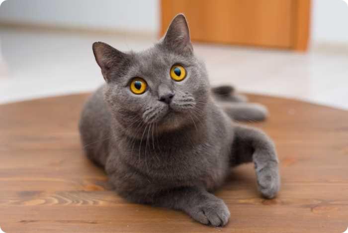 Можно ли купать кошку после стерилизации?