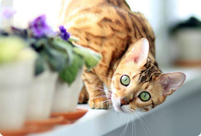 Натуральное питание для кастрированных котов