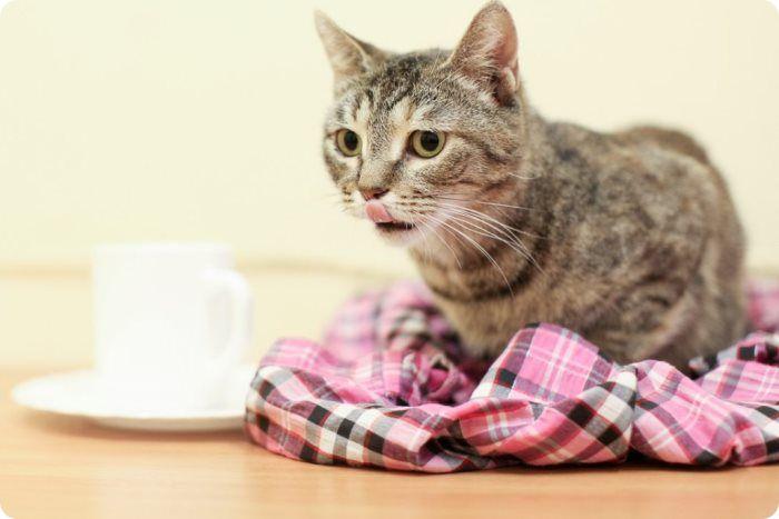 Нужна ли стерилизация кошек?