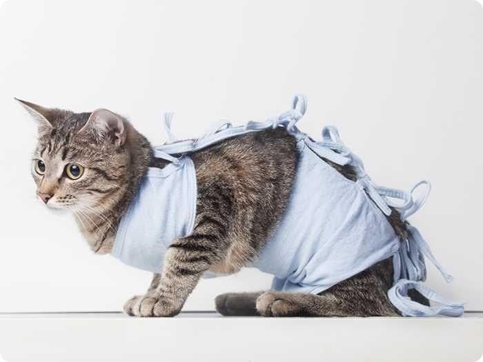 Почему стерилизация кошки достаточно дорогостоящая операция?