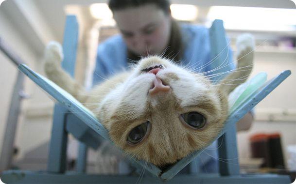 Сколько стоит стерилизация кошки?