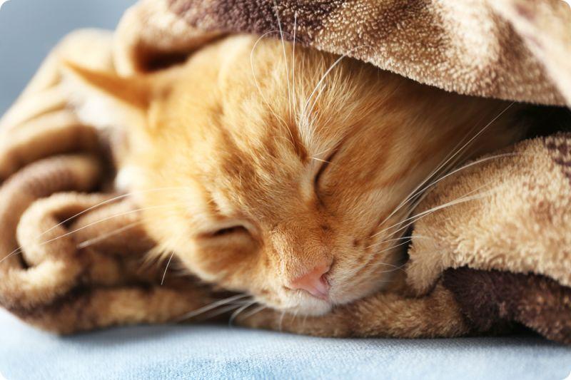 Стерилизация кошки: как ухаживать после операции?