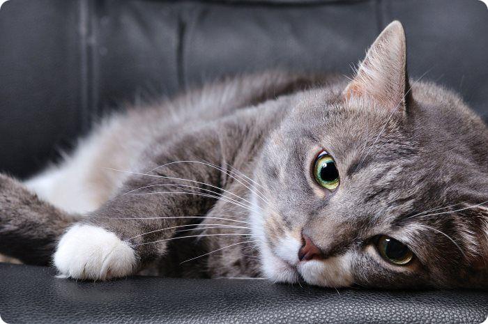 Чем может быть опасна стерилизация кошки?