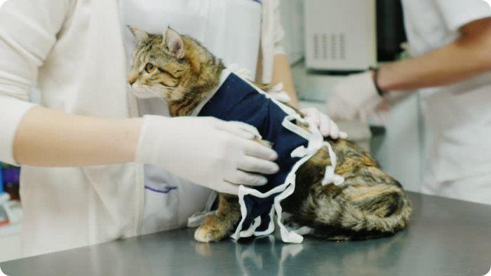 Что дает стерилизация кошек?