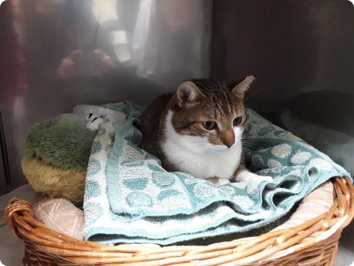 Что такое стерилизация кошки?