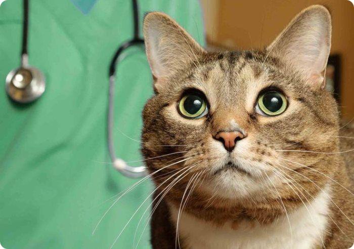 Кастрация кота до скольки лет можно?