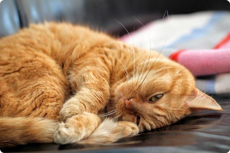 Кастрация кота где лучше делать