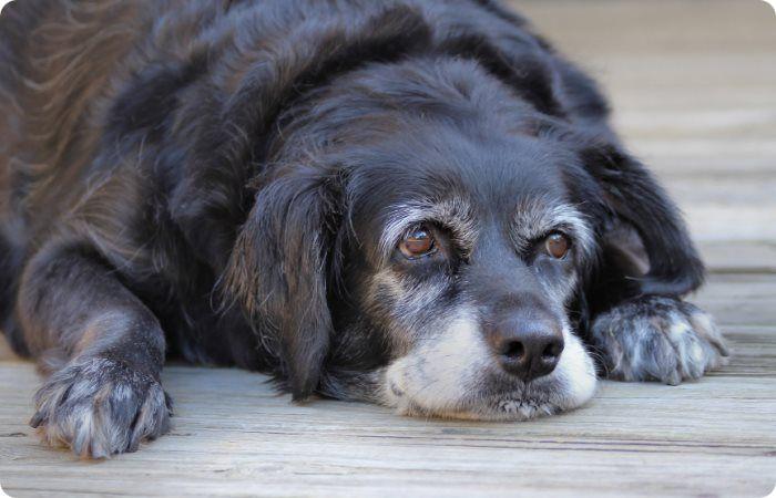 Нужно ли делать прививку от столбняка, если укусила домашняя собака