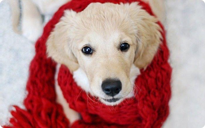 Какие прививки делать собаке весной