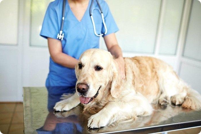 Почему собака вялая после прививки