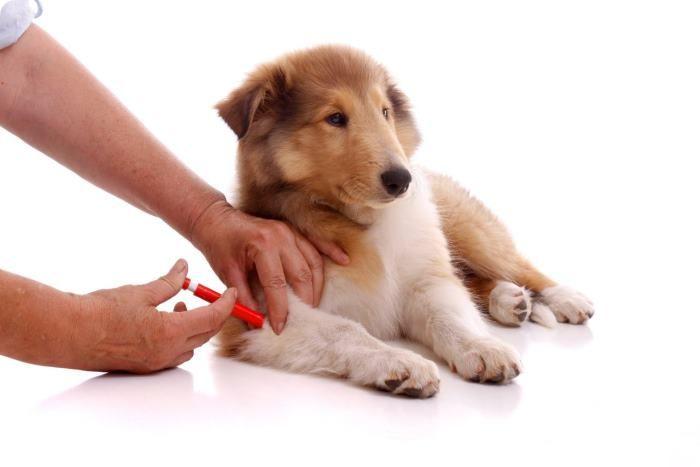 Сколько стоит прививка собаке в Киев