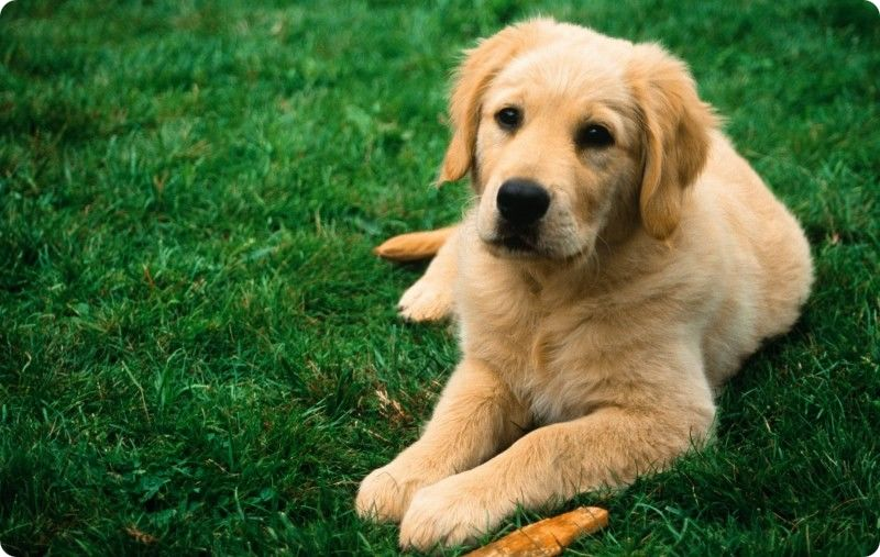 Нужно ли делать прививки пожилым собакам