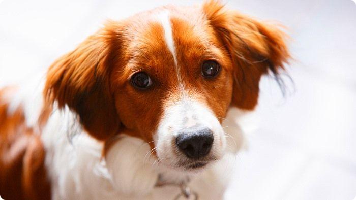 Как часто делают прививки собакам