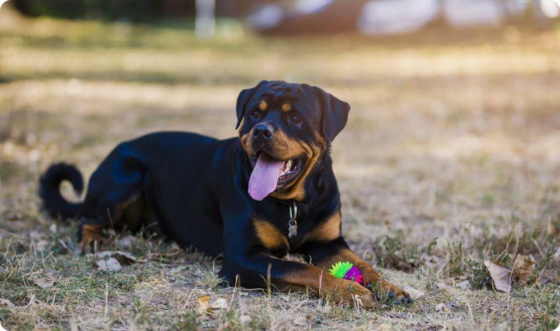Подготовка собаки к прививке